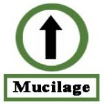 High-mucilage